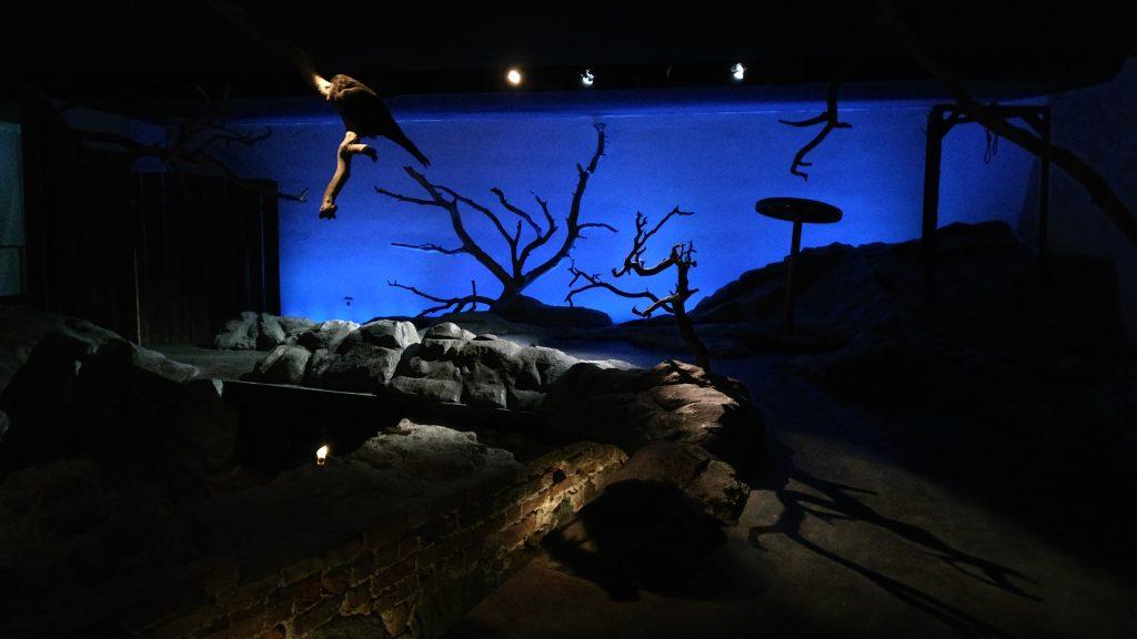 Galgbacken på Medeltidsmuseet