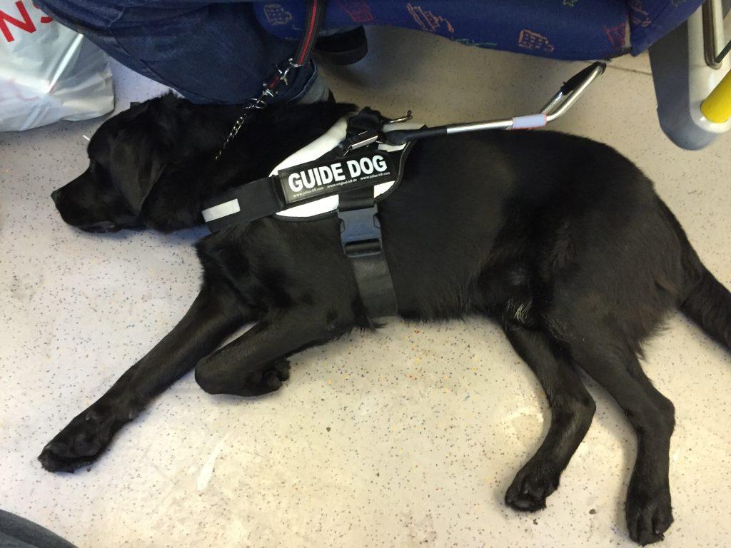 Draco ligger på sidan i sele på ett tunnelbanetåg. Foto: Jennie Lindhé