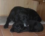 Molly fem veckor tillsammans med sin morfar Atlas
